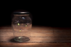 firelies in a jar on a dark background